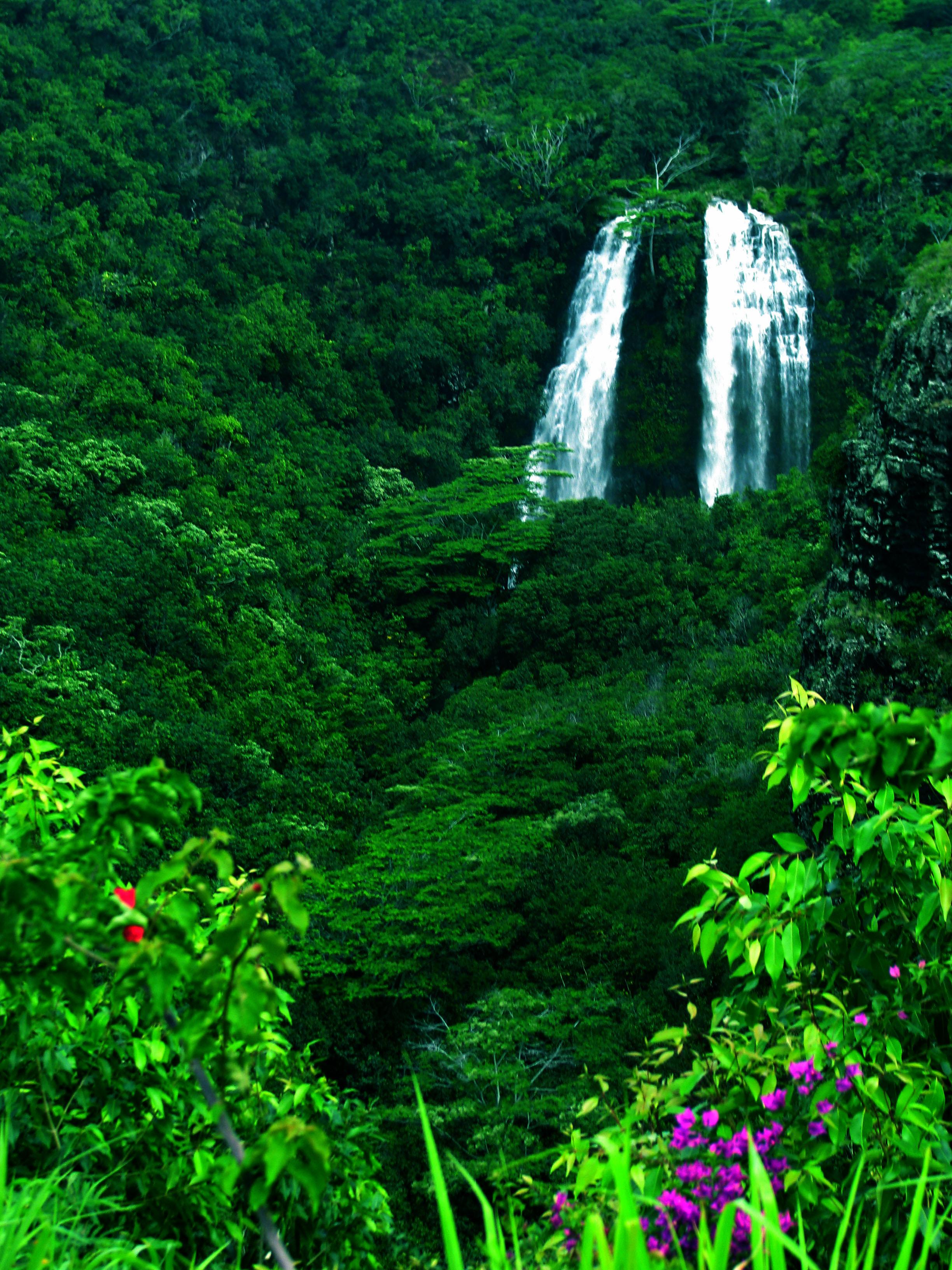 Aloha kauai foto 1 portraits 63